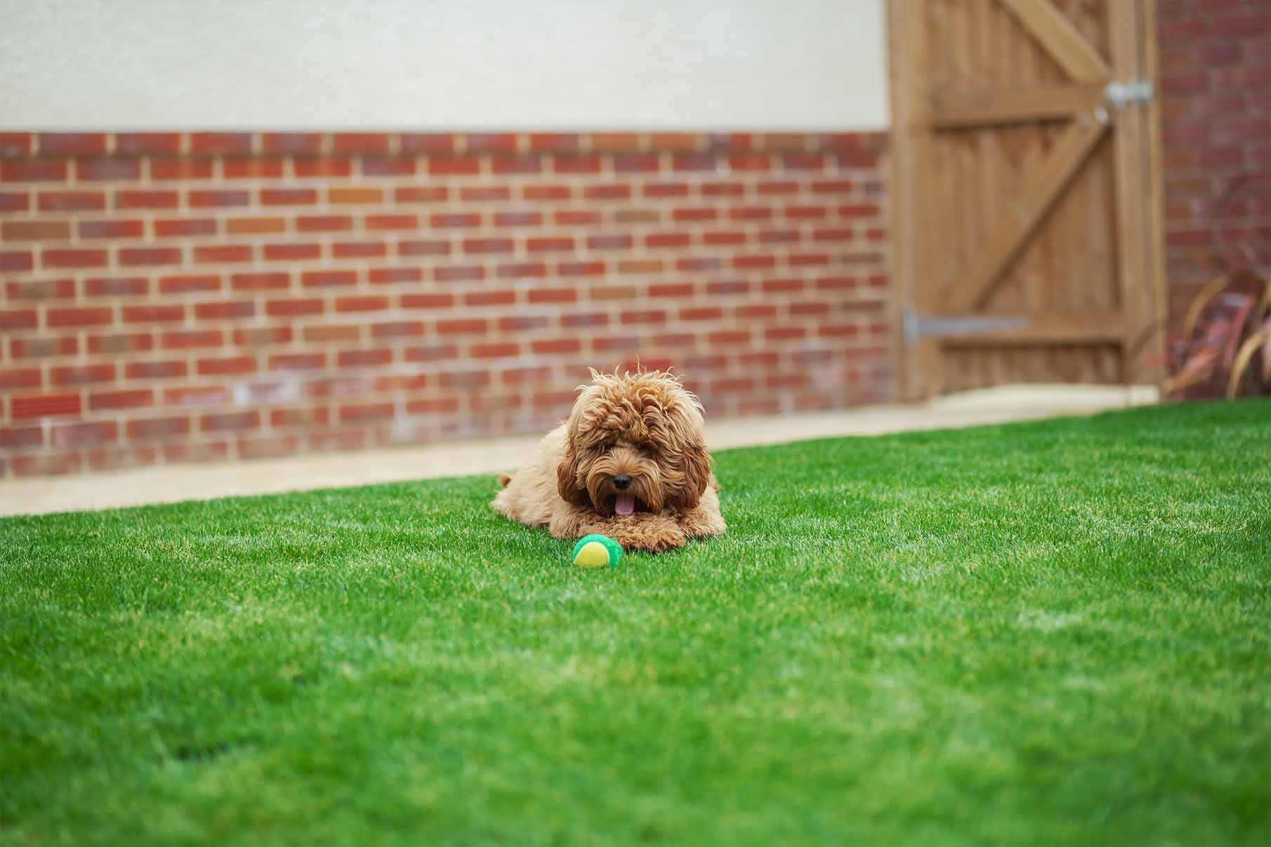 Dog with ball in garden